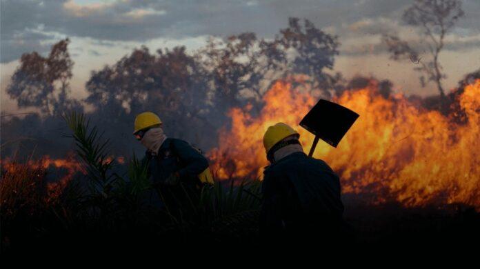 Brigadistas tentam apagar incêndio no Xingu Foto Assessoria